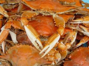 steamed maryland hard crabs